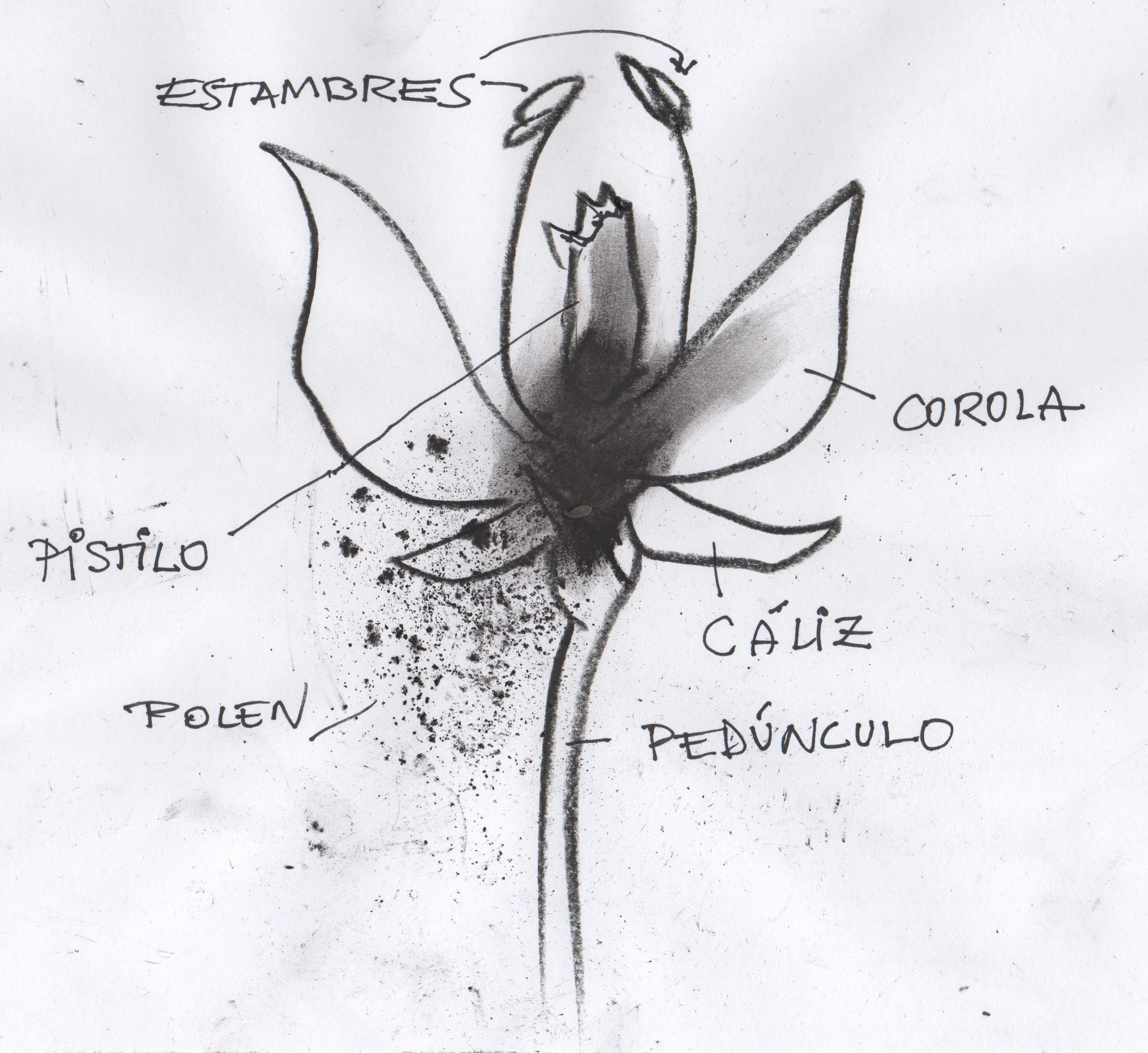 Anatomía de una flor I | Academia Acai Sabadell