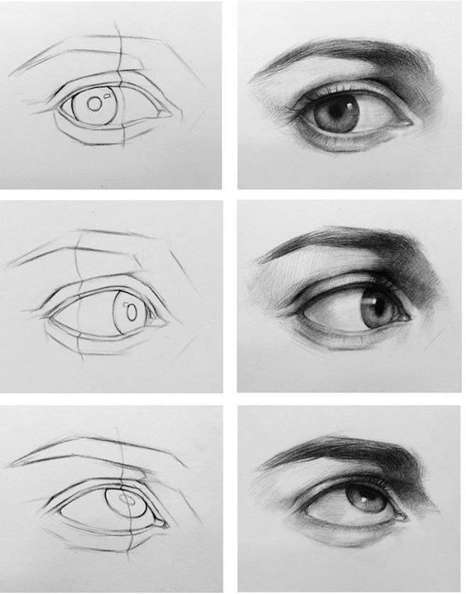 Anatomía Humana III: Ojos, orejas y nariz | Academia Acai Sabadell